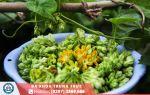 5 lưu ý cần biết trước khi sử dụng hoa thiên lý chữa bệnh trĩ